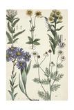 Wildflowers on Stems