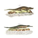 Alligator Scientific Illustrations Reproduction d'art