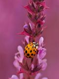 Purple Flower With Ladybug
