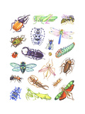 Array of Insects  Including Beetles  Grasshoppers  and Caterpillars