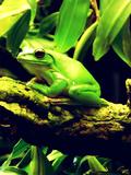 Green Wildlife Frog Animal