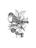 Line Drawing of Bird on Branch with Leaves and Berries