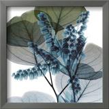 Lilly Of Eucalyptus 2