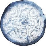 Tree Ring Overlay I
