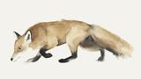 Fox Trot I Reproduction d'art par Grace Popp