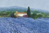 Flax Field  Provence