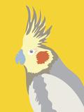 Colourful Cockatiel