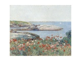 Poppies  Isles of Shoals  America  1891