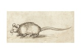 Mouse  C 1480-1520