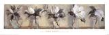 Magnolias Reproduction d'art par Carmen Galofre