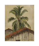 Palm Trees and Housetops  Ecuador