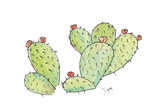 Prickly Reproduction d'art