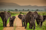 African Elephant Family on Safari  Mizumi Safari Park  Tanzania  East Africa  Africa