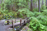 Foot Bridge  Trail to Sol Duc Falls  Rain Forest  Olympic National Park  UNESCO World Heritage Site