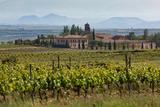 Idyllic Vineyard in La Rioja  Spain  Europe