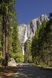 Yosemite Falls in Full Flow During Spring in Yosemite National Park  UNESCO World Heritage Site