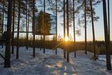 Arctic Circle  Lapland  Scandinavia  Sweden  the Tree Hotel  the Mirror Cube Room