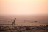 Kenya  Mara North Conservancy a Young Giraffe with Never Ending Plains of Maasai Mara Behind