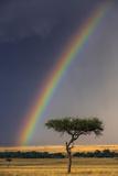Kenya  Masai Mara  Narok County a Brilliant Rainbow in Masai Mara National Reserve
