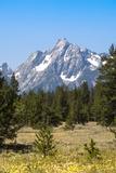 Grand Teton National Park  Teton County  Wyoming  Usa