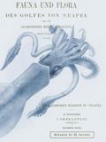 Sea Creatures - Napoli