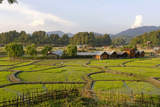 India  Arunachal Pradesh  Ziro Valley