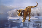 Tigre blanc de Sibérie Giclée par Leonard Pearman