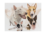 Bull Terrier with Ghost Image