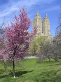 Central Park Spring Colors
