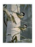 Chickadees at Dawn