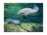 Crystal River Manatee