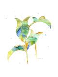 Watercolour Tropical 4