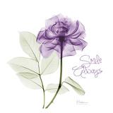 Smile Always Purple