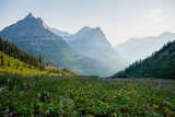 A Field of Wildflowers at Glacier National Park  Montana