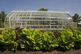 A Lush Vegetable Garden with Large Lettuces Growing in Front of a Greenhouse
