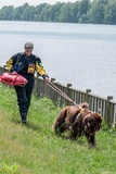 A Newfoundland Dog Trained for Rescue at Sea  with an Instructor at a Lake Near Milan