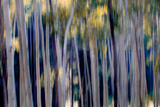 Abstract of Aspen Trees