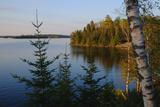 Trees Along the Eva Lake in Ontario  Canada