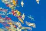 Blurred Streaks of Color and Motion from a Flock of Colored Pigeons