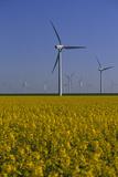 Windmill Park in Blooming Rape Field