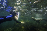 A Snorkeler Playing with a Galapagos Sea Lion Pup