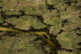 A Crocodile  Crocodylinae  Swimming Through a Small Canal in the Wetlands