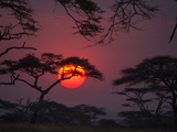 Dramatic Sky and Silhouette of Trees in Serengeti National Park