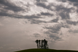 Silhouette of Trees Against Dramatic Sky  Morgan County  Tennessee