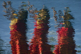 The Reflection of Hula Dancers  Dressed in Red  Dancing on the Edge of a Pool in Molokai