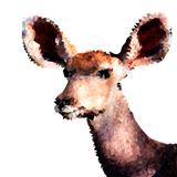 Low Poly Safari Art - Antelope - White Edition