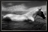 Cheval blanc en train de nager Photo encadrée par Tim Lynch