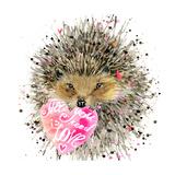Watercolor Hedgehog Hedgehog Illustration with Valentines Heart  Splash Watercolor Textured Backgr
