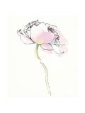 Single Pink Somniferums I on White