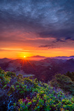 Late Spring Sunrise Magic  Mount Diablo  Lafayette  California  Oakland